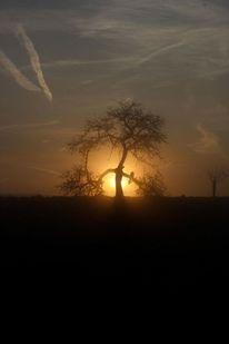 Stimmung, Sonnenaufgang, Morgenstimmung, Nebel