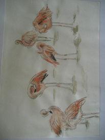 Zoo, Zeichnung, Rosa, Flamingo