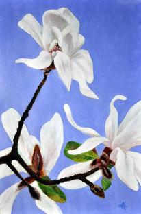 Blüte, Blumen, Weiß, Magnolien