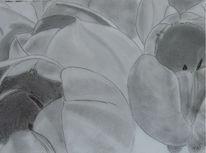 Tulpen, Zeichnung, Grau, Grafit