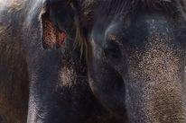 Tiere, Blick, Elefant, Fotografie