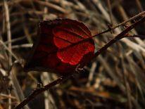 Gegenlicht, Licht, Rot, Blätter