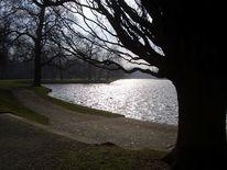 Weg, Baum, See, Fotografie