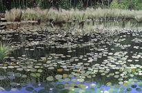 Sonnig, Teich, Romantik, Wasser