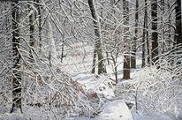 Wald, Natur, Winter sonne, Schnee