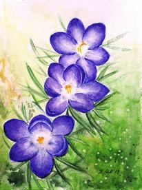 Blumen, Krokus, Pflanzen, Blüte