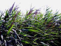 Gras, Wasser, Stille, Fotografie