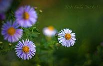 Blumen, Liebe, Grün, Karte
