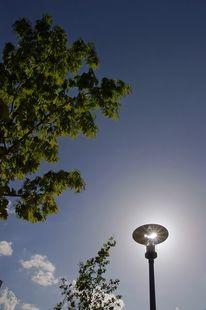 Baum, Stern, Laterne, Sonne