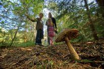 Pilze, Grau, Wald, Angst