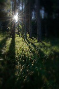 Licht, Wald, Grün, Strahlen