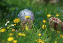 Frühling, Jung, Löwenzahn, Finden