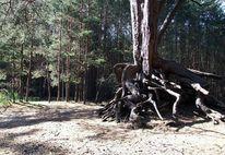 Wurzel, Sand, Wald, Baum