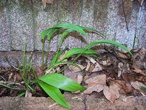Würze, Pflanzen, Fotografie,