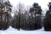 Wald, Weg, Winter, Baum