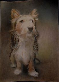 Portrait, Hund, Buntstiftzeichnung, Zeichnungen