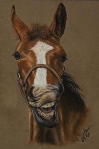 Grimasse, Pferde, Kreide, Pastellmalerei