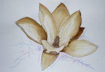 Blüte, Kaffeepalerei, Malerei, Magnolien
