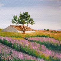 Blutüen, Olivenbaum, Blumen, Landschaft