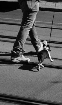 Hund, Menschen, Prag, Schwarz weiß