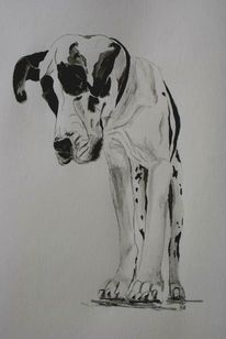 Aquarellmalerei, Doge, Hund, Schwarz weiß