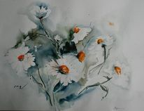 Margerite, Blumen, Weiß, Blüte