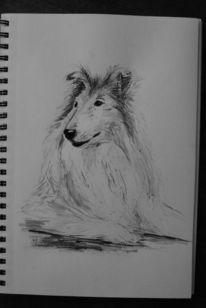Collie, Tuschmalerei, Stolz, Hund