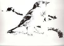 Tiere, Vogel, Zeichnung, Tusche