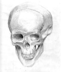 Zeichnungen, Schädel