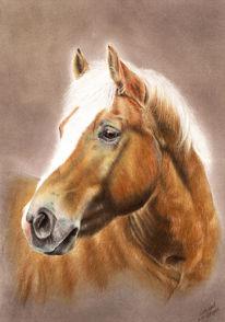 Portrait, Buntstiftzeichnung, Pferde, Zeichnungen