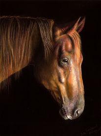 Pastellmalerei, Pferde, Malerei, Tiere