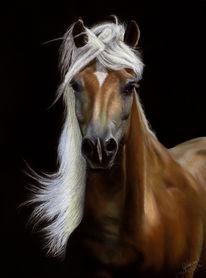 Pferde, Portrait, Pastellmalerei, Zeichnungen