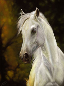 Pferde, Portrait, Pastellmalerei, Schimmel