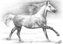 Warmblut, Pferde, Realismus, Cheval