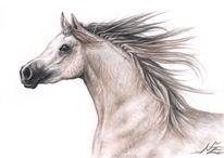 Pferdeportrait, Portrait, Hengst, Kohlezeichnung