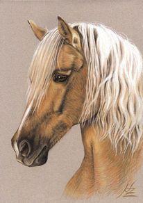 Pferde, Pferdeportrait, Cheval, Lichtfuchs