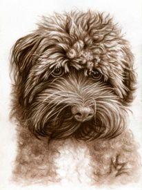 Hund, Braun, Bolonka, Zeichnung