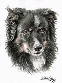 Hund, Kohlezeichnung, Sepia, Zeichnung