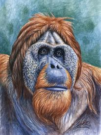 Affe, Tierportrait, Tierblick, Aquarellmalerei