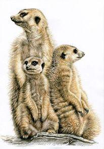 Tierwelt, Tiere, Zeichnung, Tierportrait