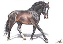 Zeichnung, Pferde, Trab, Hannoveraner