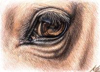 Pferdeauge, Pferde, Tierzeichnung, Augen