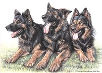 Portrait, Hund, Buntstiftzeichnung, Schäferhund