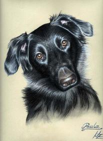 Pastellmalerei, Portrait, Hund, Realismus