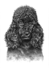 Tierportrait, Hund, Kohlezeichnung, Schwarz
