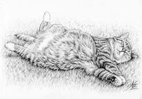 Katze, Haustier, Tiere, Zeichnung