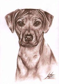 Hundeportrait, Kohlezeichnung, Portrait, Hund