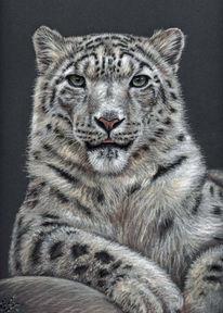 Tierzeichnung, Schneeleopard, Tierportrait, Großkatze
