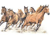 Pferde, Warmblut, Hengst, Stute