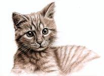 Katze, Portrait, Tiere, Sepia